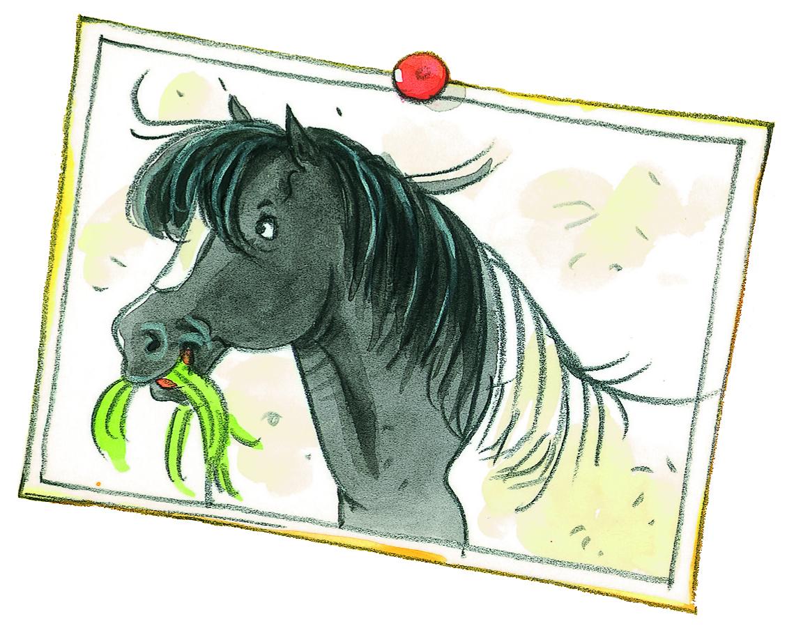 Alle Pony S Van Manege De Zonnehoeve Paardenboeken Nl
