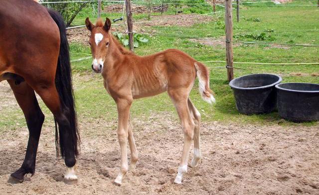 Dit is Jorrin toen hij pas vijf dagen oud was.