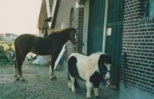 pollo_blue_winterswijk