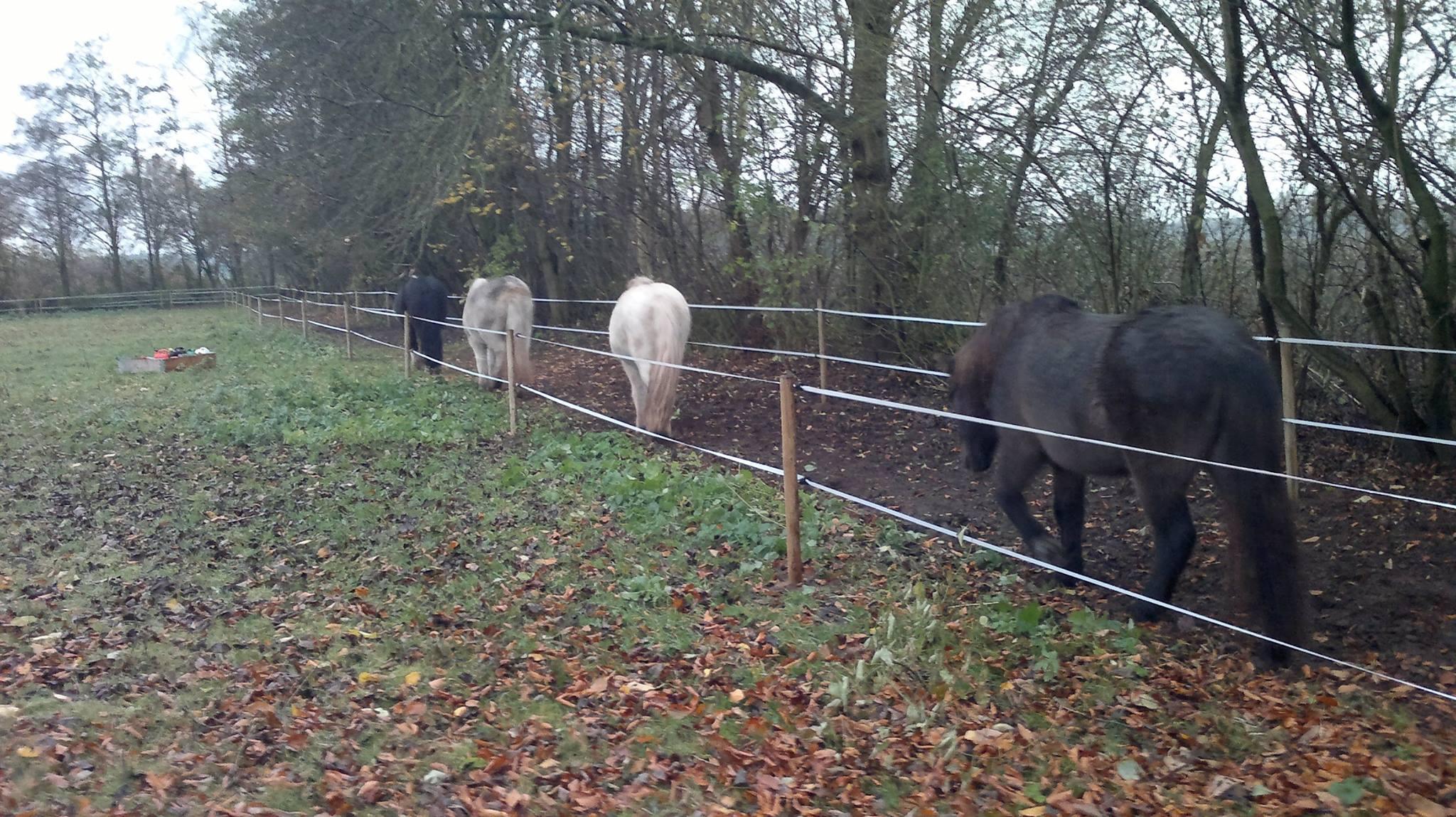 Foto van Yvonne van Zijl: Frekja, Líf, Hekla en Muis verkennen het pad. Flicka loopt achter Muis.